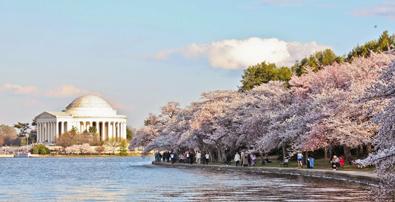 Mùa Hoa Anh Đào Washington DC